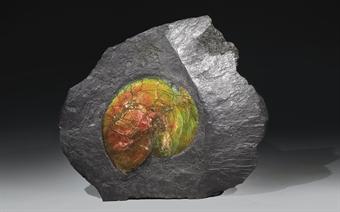 Fósil de amonita iridiscente do Mesozoico subhastada en Christie's