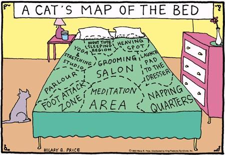 mapa de gato