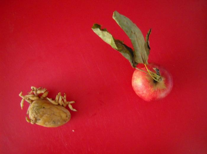 velenosa pataca con fillos e mazá