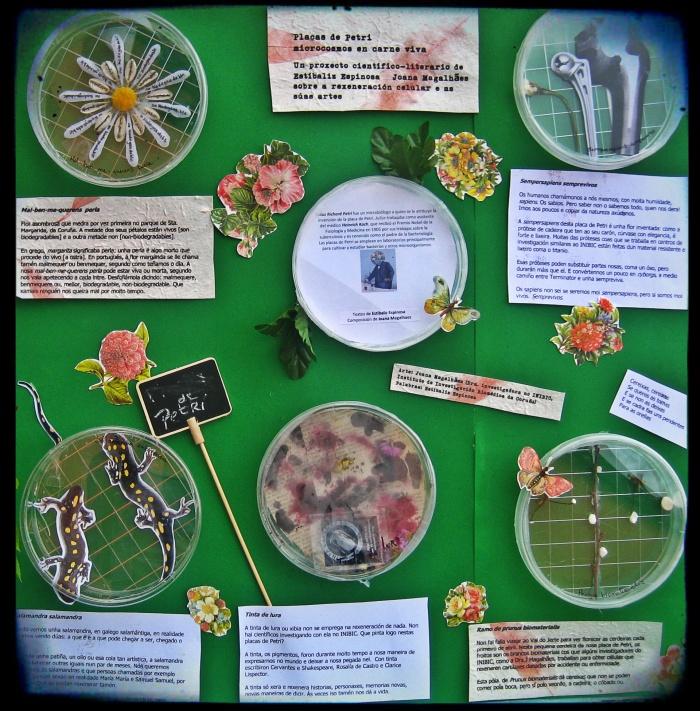 placas de Petri 3