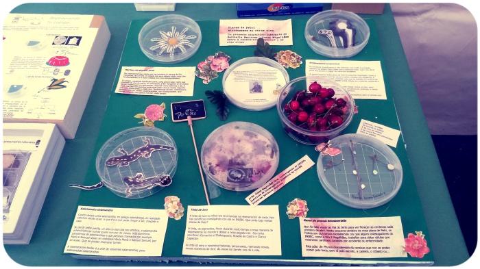 placas de Petri con cereixas