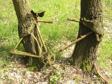bycicle esnaquizada por árbores